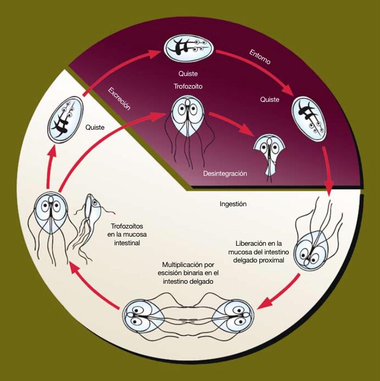 Bienvenido a ImmuneStem Instituto de Inmunología Clínica y Terapia Celular
